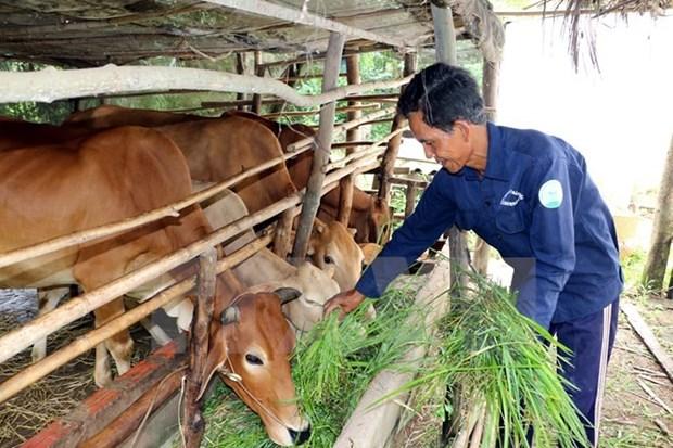 Impulsan la produccion en zonas pobres en Vietnam hinh anh 1