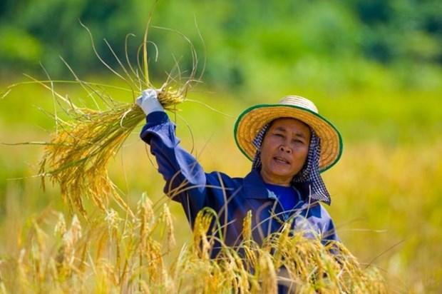China se compromete a impulsar importacion de caucho y arroz de Tailandia hinh anh 1