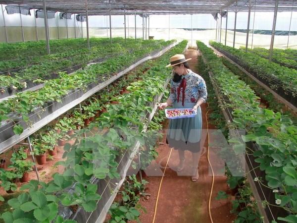 Vietnam impulsa desarrollo de cooperativas agricolas de alta tecnologia hinh anh 1