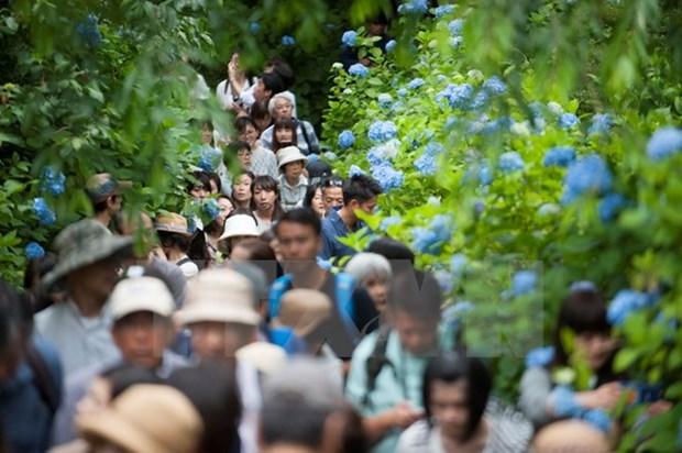 Vietnam lidera visita de turistas del Sudeste Asiatico a Japon hinh anh 1