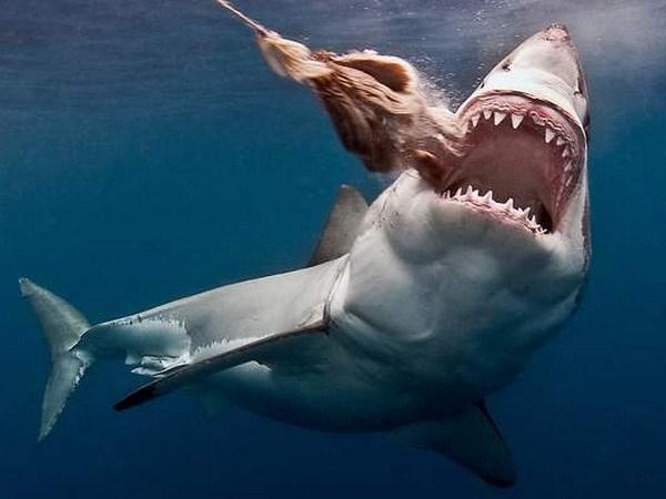 Embajada vietnamita en Chile informa sobre suceso referente a aletas de tiburon hinh anh 1