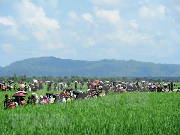 Bangladesh pospone regreso de refugiados rohingya a Myanmar hinh anh 1