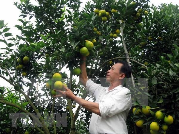 Inician construccion de fabrica de procesamiento de frutas en provincia septentrional vietnamita hinh anh 1