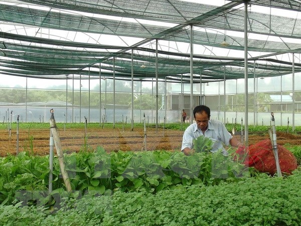 Agricultura inteligente: oportunidades y desafios para Vietnam hinh anh 1