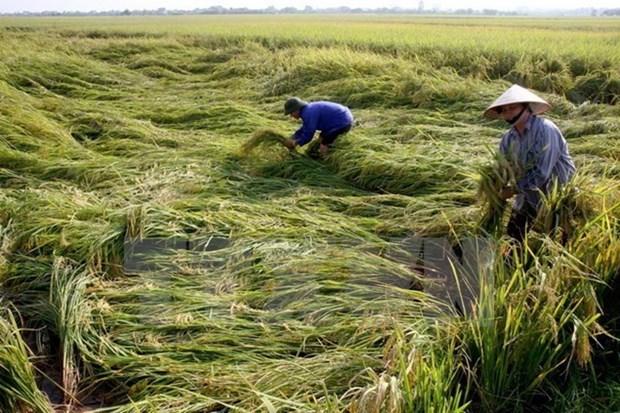 Recaudan 480 mil dolares a favor de agricultores con motivo del Tet hinh anh 1