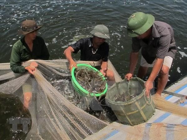 Premier de Vietnam exhorta a impulsar industria del camaron en Bac Lieu hinh anh 1