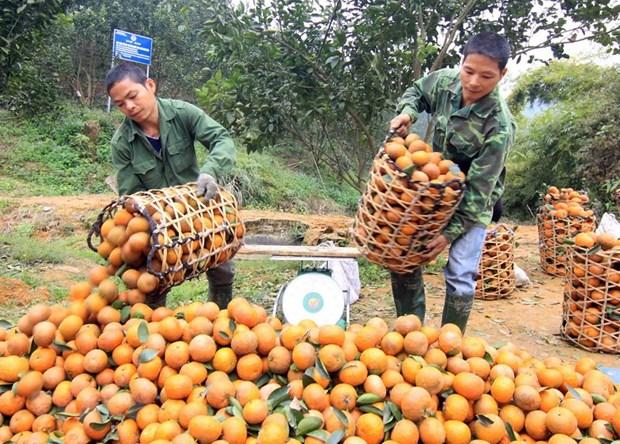 Proyecto de agricultura apoya a personas pobres en provincia vietnamita hinh anh 1