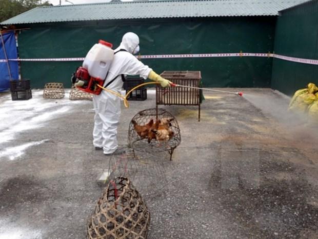 Vietnam no reporta nueva cepa de gripe aviar hinh anh 1
