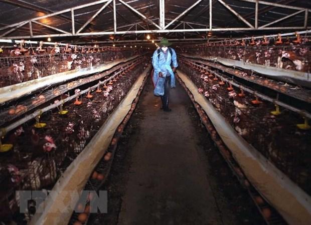 Vietnam refuerza medidas preventivas por gripe aviar hinh anh 1