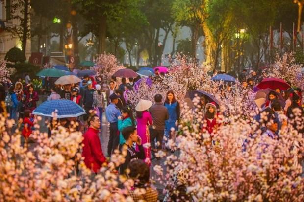 Festival de flores de cerezos tendra lugar en Hanoi en marzo proximo hinh anh 1