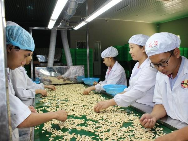 Vietnam por elevar ganancia para agricultores de anacardo hinh anh 1