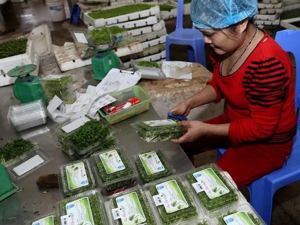 Crecen ventas al exterior de frutas y verduras de Vietnam en enero hinh anh 1