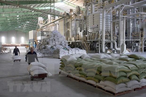 Myanmar efectuara foro sobre desarrollo de produccion arrocera hinh anh 1