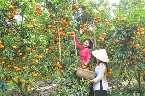Lai Vung: