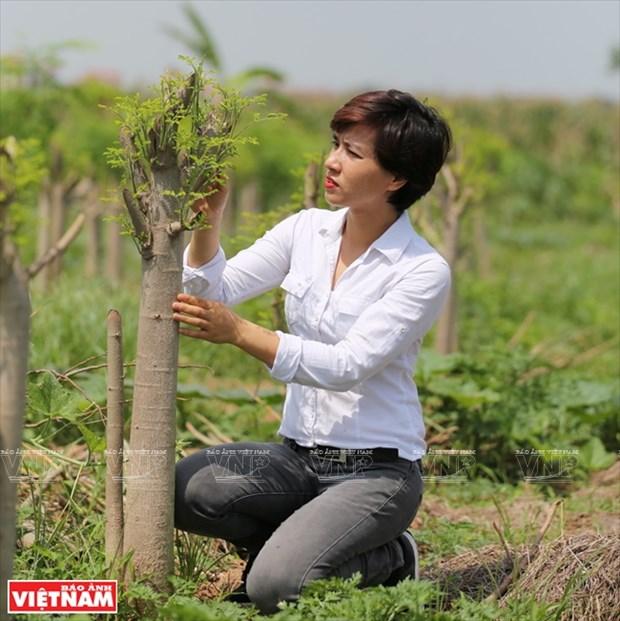 MoriS: la historia detras de una nueva empresa agricola hinh anh 1