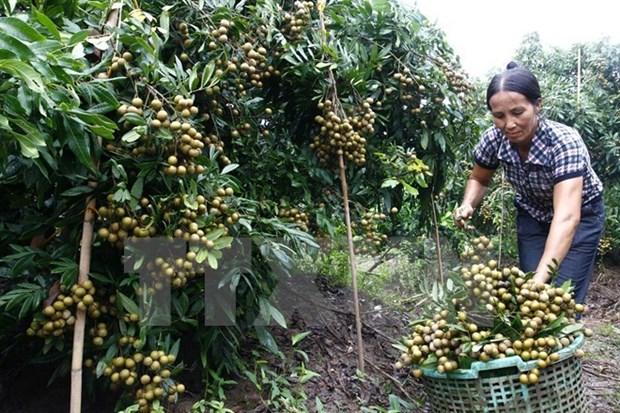 Hanoi y Hung Yen cooperan en suministro de productos agricolas de calidad hinh anh 1