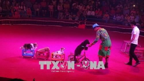 Efectuan en Vietnam primera Gala Internacional de Circo hinh anh 1