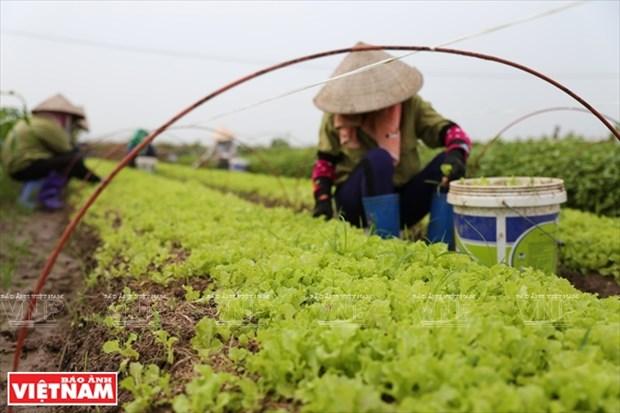 Vegetales de Nhat Viet conquistan el corazon del consumidor hinh anh 1