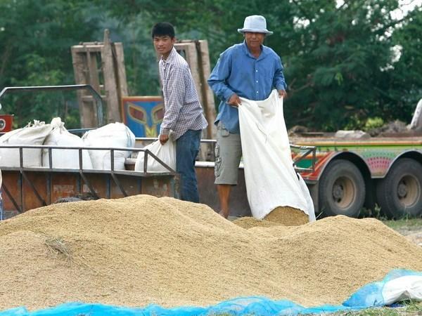 Tailandia recomienda ralentizar produccion de arroz hinh anh 1