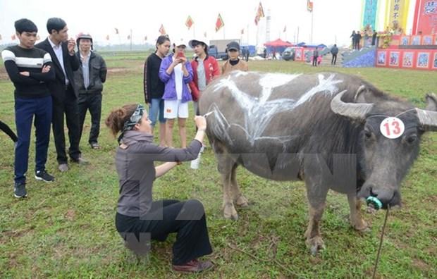 Comienzan festivales primaverales en provincias nortenas de Vietnam hinh anh 1