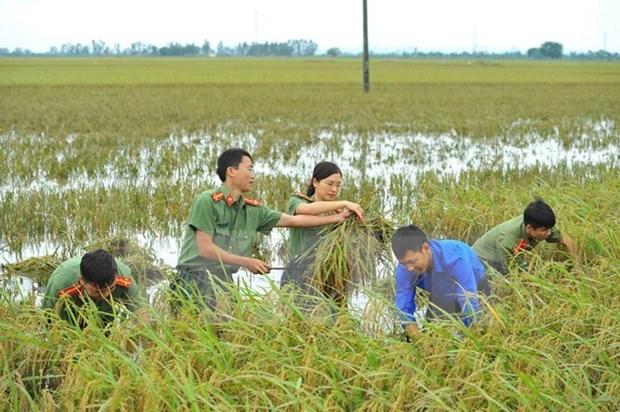 Aumentan calidad de vida de pobladores en zonas rurales en provincia norvietnamita hinh anh 1