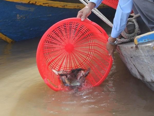 Liberan en Hanoi peces en motivo del Ano Nuevo Lunar hinh anh 1