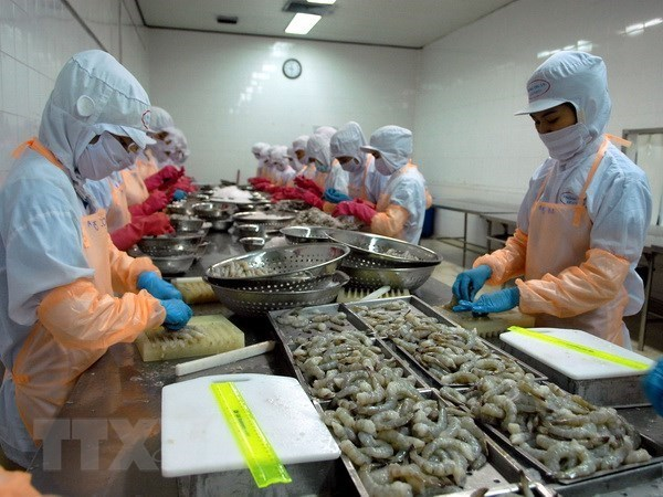 Australia inspecciona cadena de produccion de camarones de Vietnam hinh anh 1