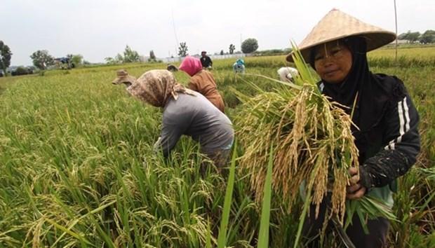 Indonesia busca fortalacer lucha contra la pobreza hinh anh 1
