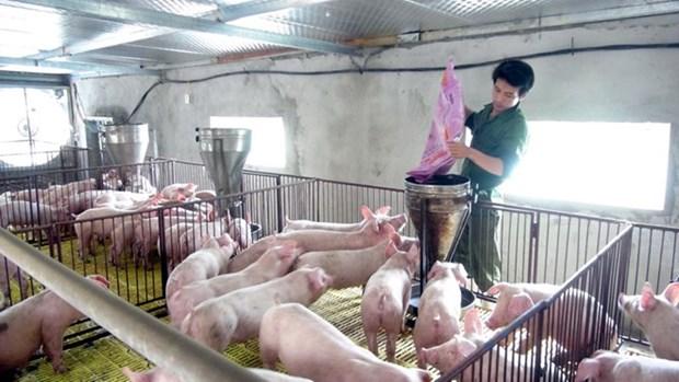 Vietnam podra ampliar mercado ganadero durante participacion en feria hinh anh 1