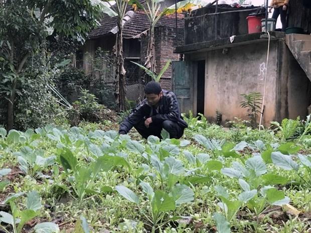 Proyecto japones ayuda a mejorar ingresos de agricultores de Son La hinh anh 1