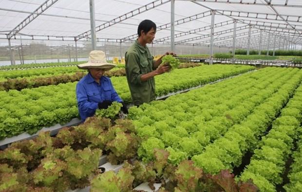 Vietnam busca exportar mas productos agricolas a Sudcorea hinh anh 1