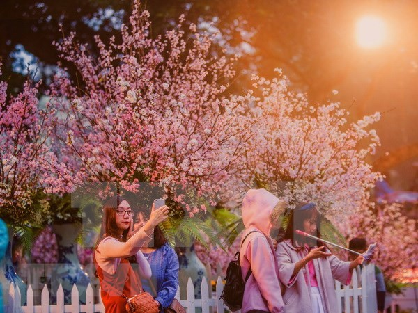 Festivales de flores de cerezo marcan aniversario de relacion Japon- Vietnam hinh anh 1