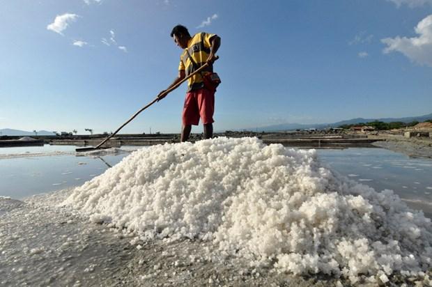 Indonesia importara 3,7 millones de toneladas de sal industrial este ano hinh anh 1