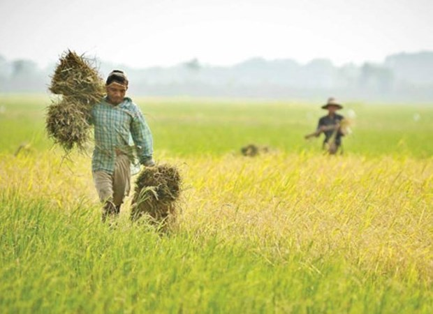 FIDA ayuda a Myanmar a mejorar ingresos de los agricultores hinh anh 1
