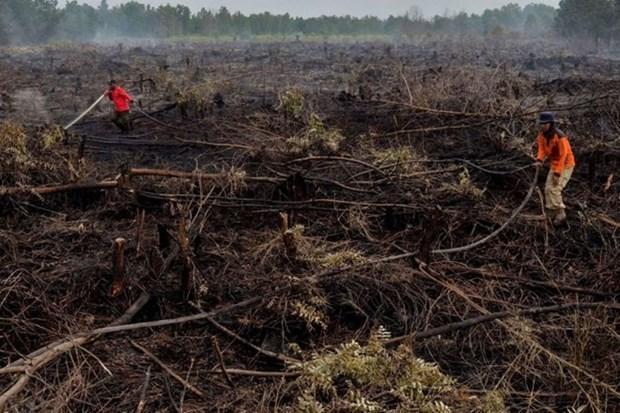 Naciones Unidas elogia esfuerzos de Indonesia para restaurar las turberas hinh anh 1