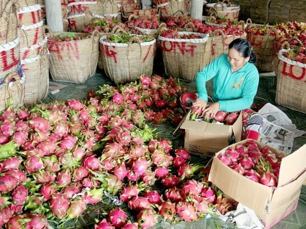 Provincia china estrecha estandares de frutas importadas de Vietnam hinh anh 1
