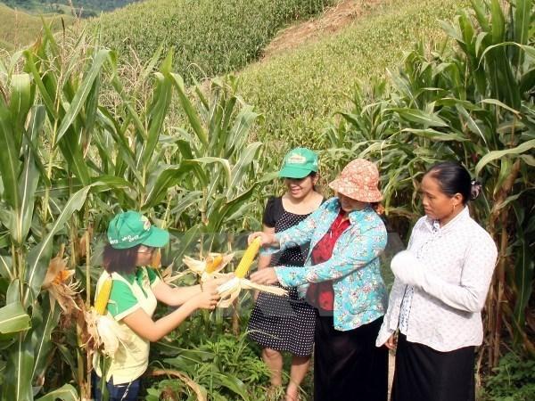 Informe de BM resalta logro de Vietnam en reduccion de la pobreza hinh anh 1