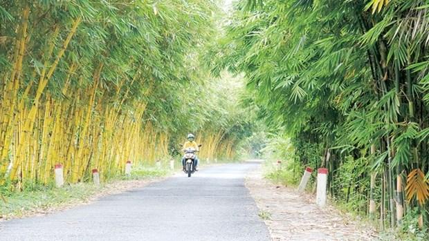 Peculiar coleccion de bambu en provincia vietnamita de Dong Thap hinh anh 1