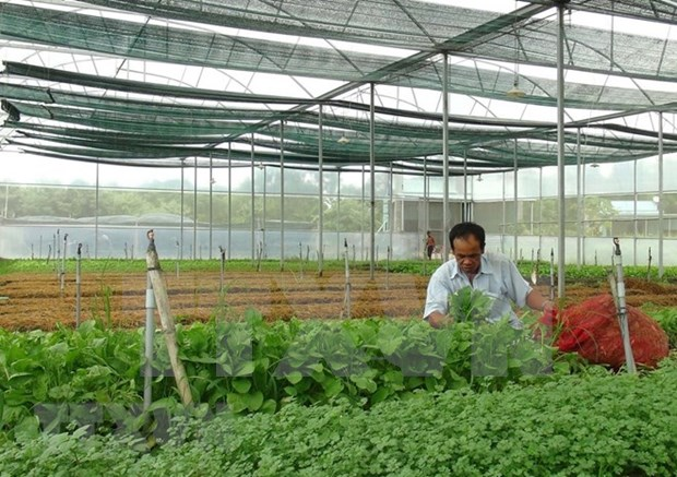 Vietnam busca reforzar marca nacional de productos hortofruticolas hinh anh 1