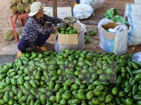 Localidades altiplanicas de Vietnam impulsan la siembra de frutas hinh anh 1