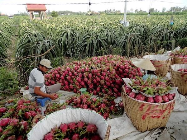 Australia asesora a Vietnam en desarrollo agricola hinh anh 1