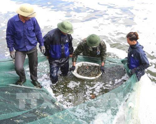 Provincia vietnamita actua contra la pesca ilegal como respuesta a advertencia de la UE hinh anh 1