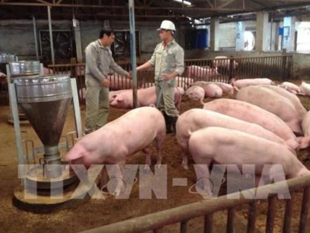 Debaten medidas para impulsar la exportacion de productos ganaderos de Vietnam a Malasia hinh anh 1