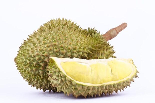 Grupo chino Alibaba y Tailandia firman un contrato para la venta de durian hinh anh 1