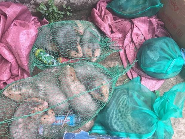 Detectan trafico ilegal de animales salvajes en provincia vietnamita de Binh Duong hinh anh 1