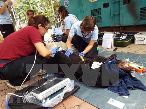 Vietnam impulsa proteccion de animales silvestres hinh anh 1