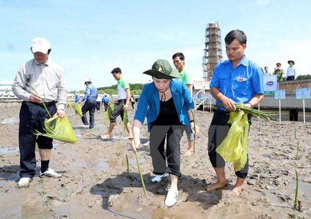 Plantan miles de arboles en extremo sur de Vietnam para enfrentar cambio climatico hinh anh 1