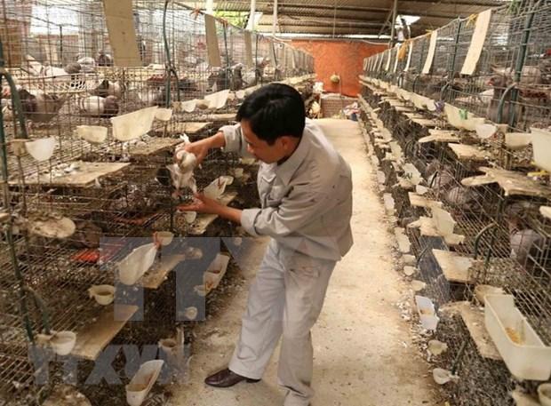Sigue en tendencia alcista exportaciones agrosilvicolas y acuaticas de Vietnam hinh anh 1