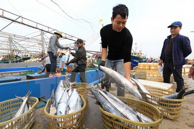 Crece produccion pesquera de Vietnam en primer cuatrimestre hinh anh 1