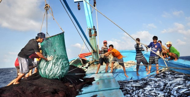 Barcos pesqueros de Vietnam laboran apegados a la ley desde principios de ano hinh anh 1